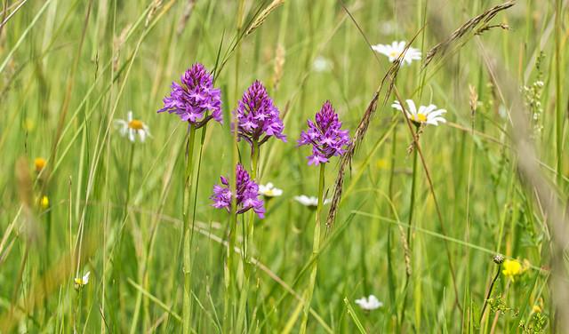 Seltene Blüten