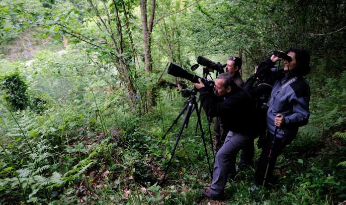 Observando al oso pardo cantábrico con telescopio y prismáticos (Somiedo)