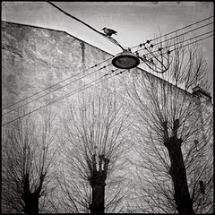 Crow-St Petersburg.jpg