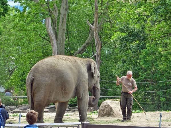 Elefanten_Mai20_10_ANCHALI_ueberwachungDerReinigungsarbeiten_Fr_13h45_200529