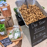 Freshly dug local potatoes at Booths
