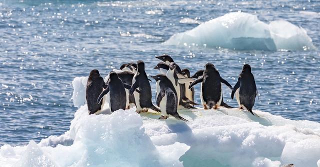 Enjoying antarctic summer sun