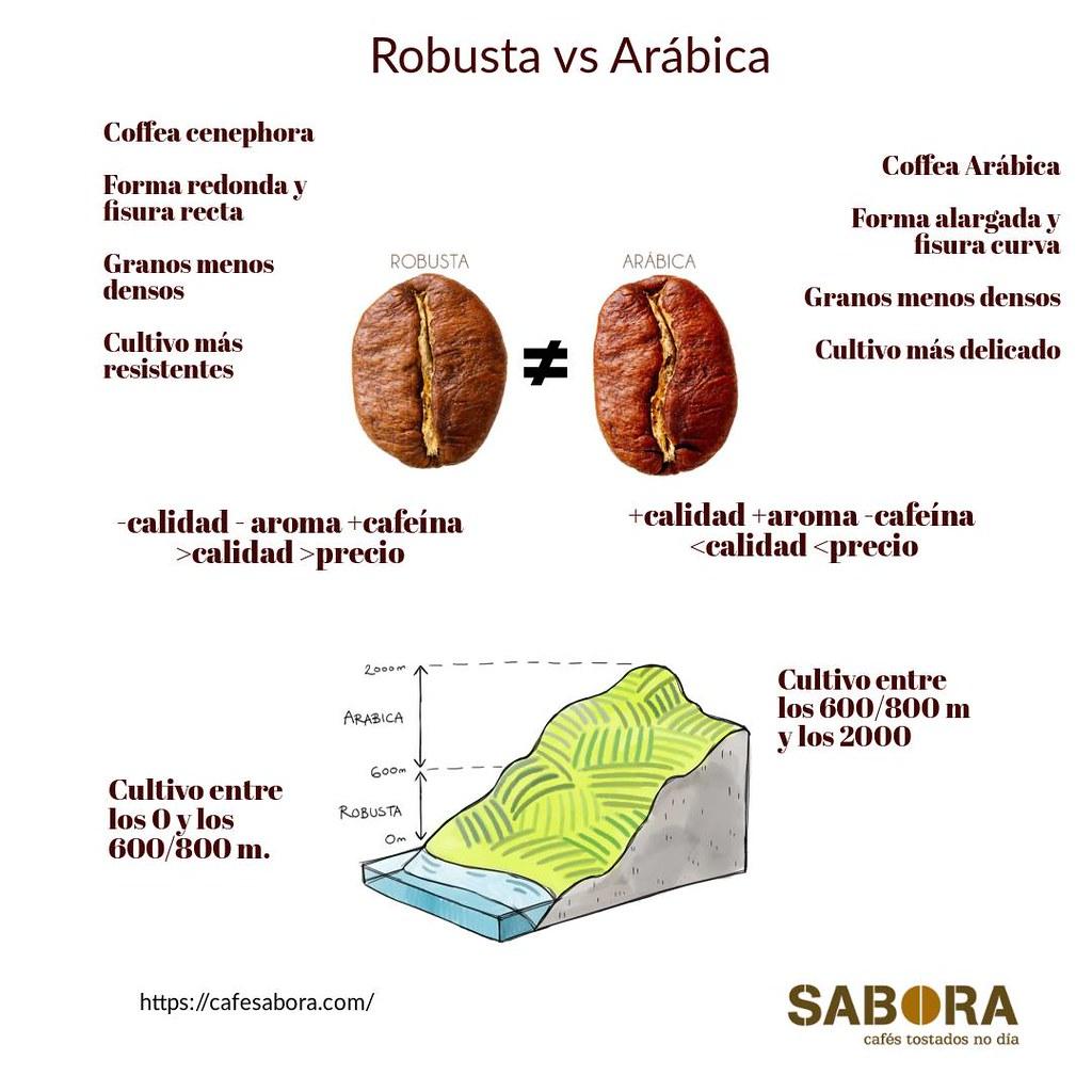 Infografía Robusta versus Arábica