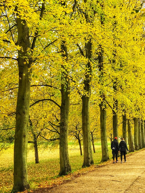 Cambridge photo walk Nov 2019