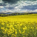 29. Mai 2020 - 15:47 - Yellow