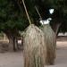 Diola mythology - the Kumpo