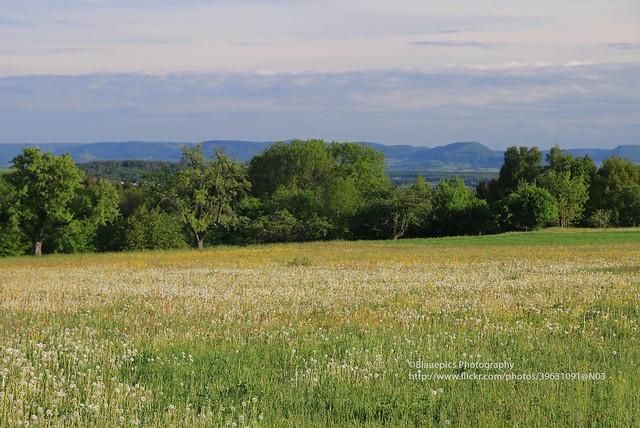 Hohengehren, Rainwiesen, view to the Swabian Alb