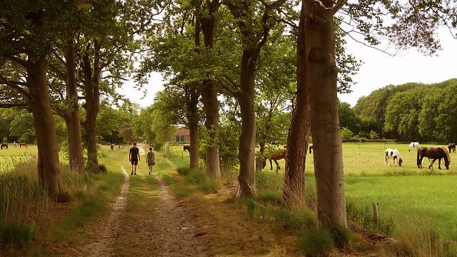 Groeneveld