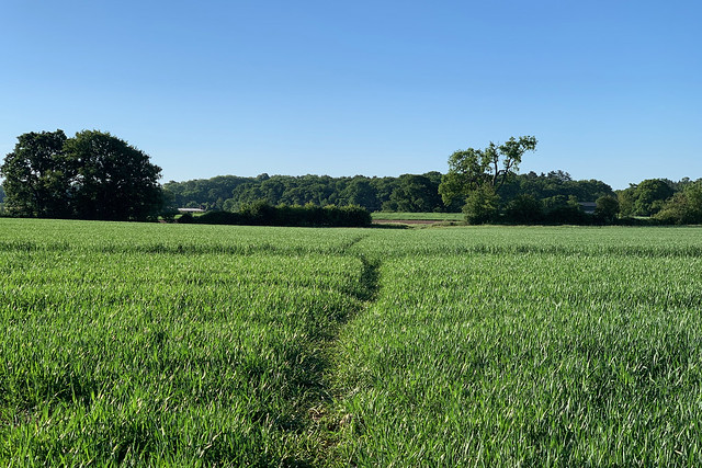 Route across the field