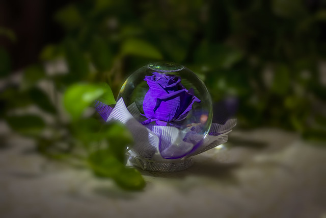 Purple Rose 2