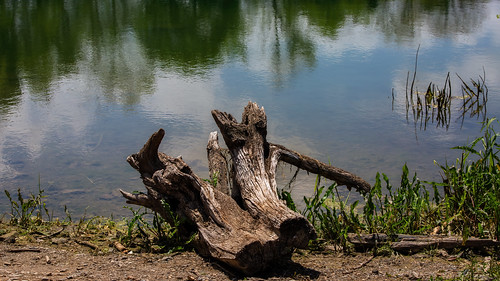 stump tree lake water reflection sky outdoors lakeside reflections myerstownpennsylvania landscape canoneos5dmarkiii ef70300mmf456isiiusm milliecruz