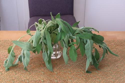 Salbei (am Vortag geerntet und dann in Wasserglas Chance zum Durchhalten gegeben)