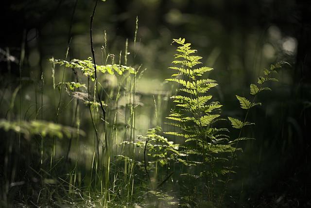 Fern in spot light