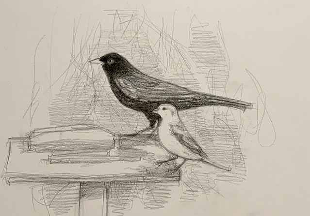 Blackbird and sparrow on the bird table today. Drawing by jmsw, from sketches .