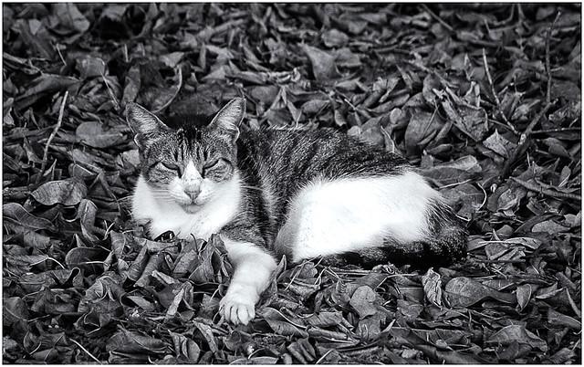 Gato Sin Casa (Homeless Cat)