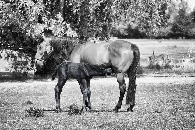 Mare & foal