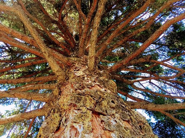 Happy Tree Mendous Tuesday