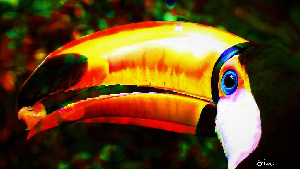 Beak Toco Toucan
