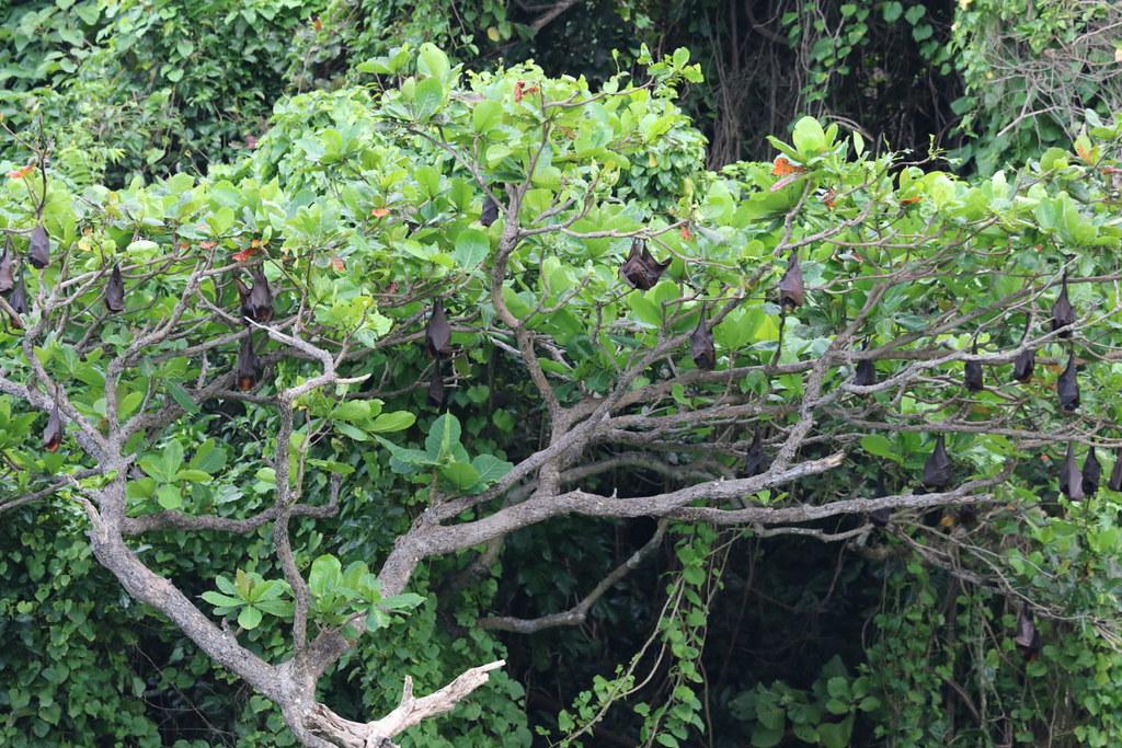 位於長灘島北方的蝙蝠棲所