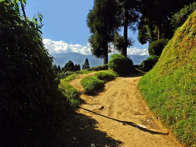 The shining path...