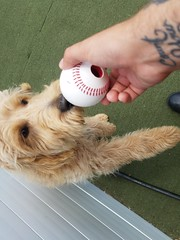 06_01_20 Baseball Play :-)