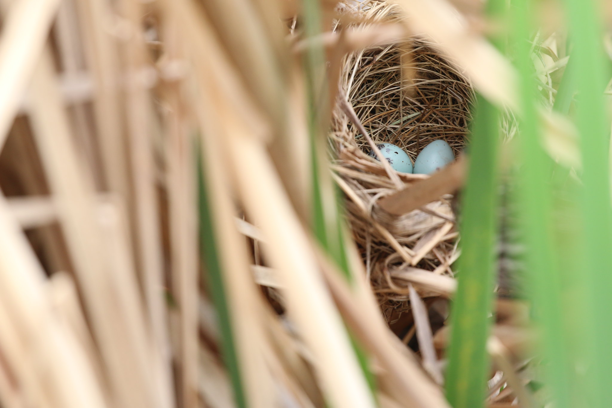 In the Nest (SOTC 359/365)
