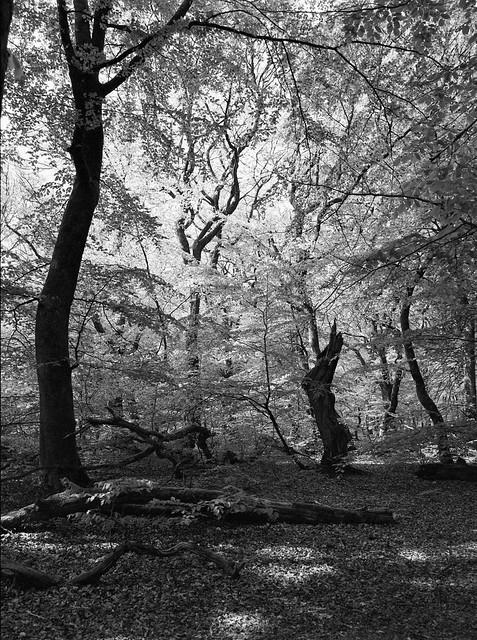 Dødt træ i Troldeskoven