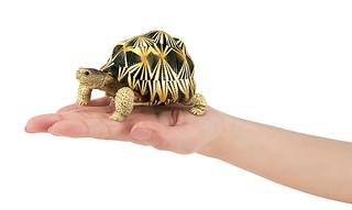 超人氣龜龜大好評第二彈!GASHAPON「烏龜02」轉蛋(かめ02)全五款