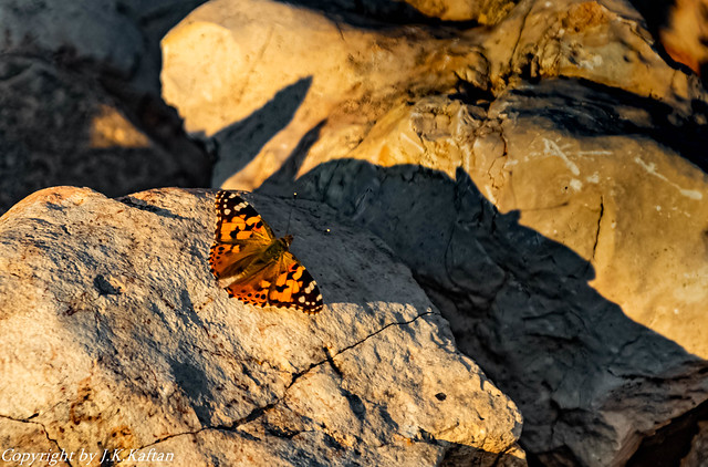 the butterfly and its shadow, la mariposa y su sombra