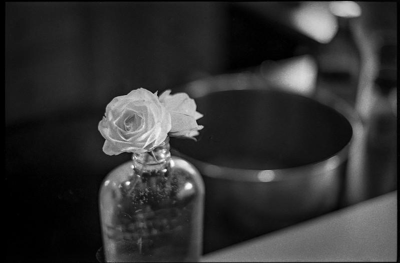 two tiny, white rose blossoms, bourbon bottle vase, kitchen, Asheville, NC, Minolta XG M, Super Albinon 28mm f/2.8, lens, Kodak TMAX 400, Moersch Eco film developer, 5.31.20