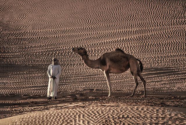 Car of the desert