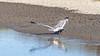 Don Edwards San Francisco Bay National Wildlife Refuge-5410