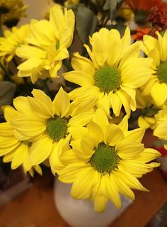 Birthday chrysanthemums