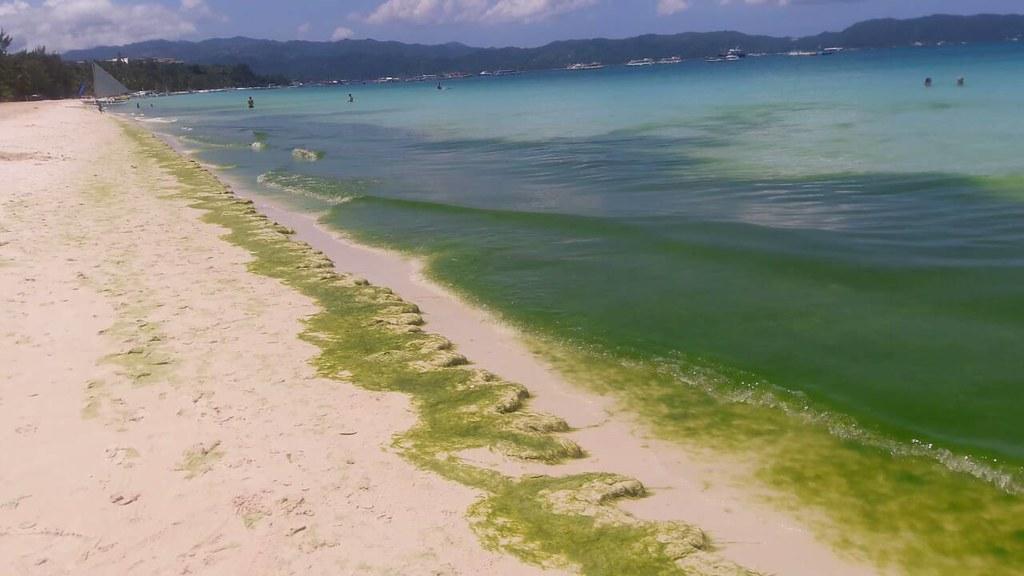 長灘島優養化 Boracay algal bloom