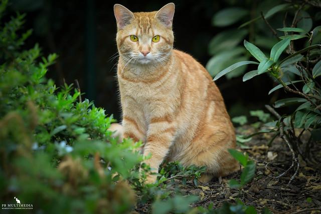 Akasha In Her Garden