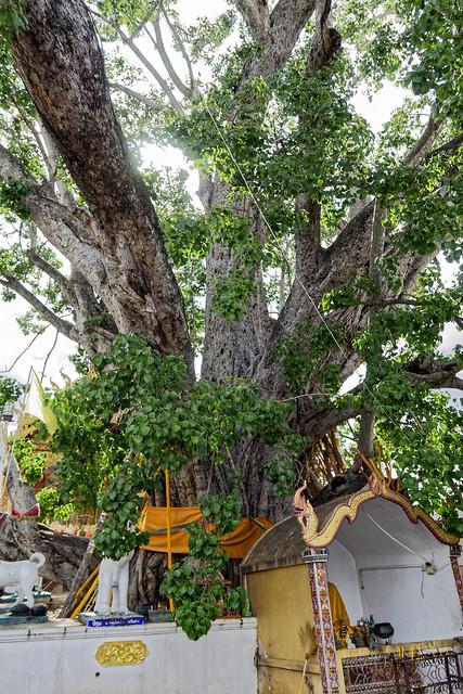 Wat San Klang Nuea (34 sur 50)