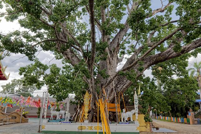 Wat San Klang Nuea (29 sur 50)