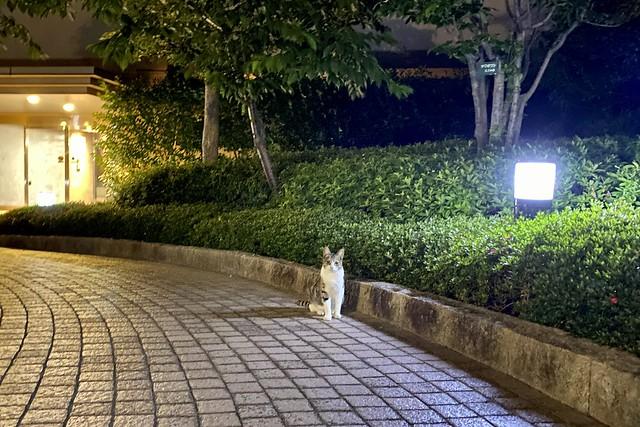Today's Cat@2020ー06ー02
