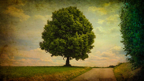 tree texture photoshop cantonofzurich switzerland june 2020 landscape andykobel