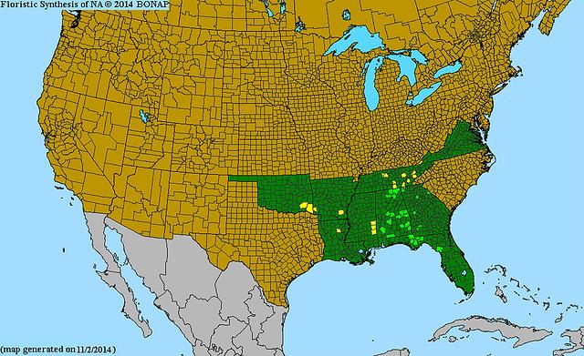 Range distribution map of Whiteleaf Leather Flower from bonap.org