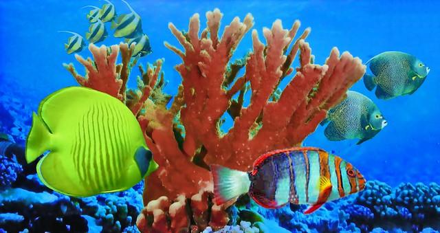 French Polynesia - Undersea