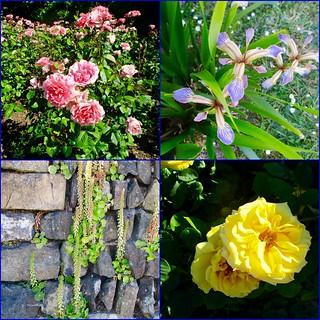 Mullion in bloom