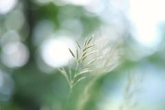 #morning #picoftheday #photooftheday #colors #landscape #nofilter #photo #ontheroad #minimalism #skyline #sunset #flowers ##morning #picoftheday #photooftheday #colors #landscape #nofilter #photo #skyline #sunrise #ontheroad #minimalism #mountains #sunshi