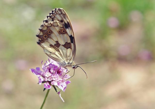 tiempo de mariposas