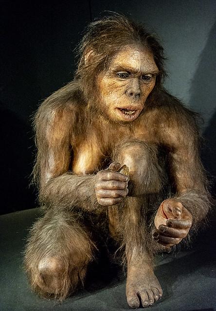 E4310-Homo habilis