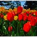 2020 Canadian Tulip Festival