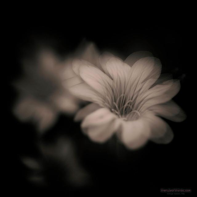 Flower Macro Doubled #3, 2020