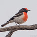 Jim Scarff posted a photo:Merriden Rock, Western Australia