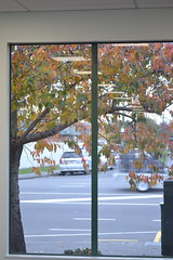 Autumn leaves, Shirley Library