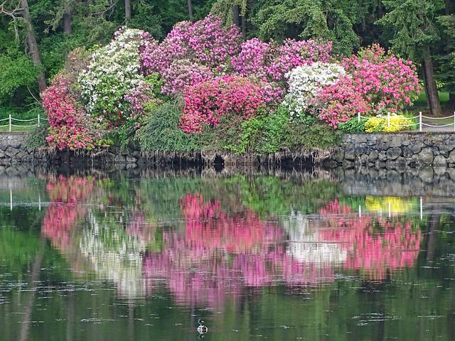Spring flowers Gorge Waterway Victoria B.C. Canada
